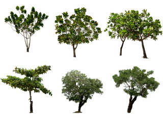 tree isolate background with Clipping Path.