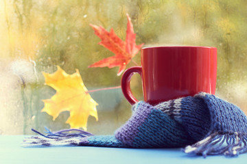 autumn still life/ red mug in a blue knitted scarf on the background of a window with wet leaves after a rain