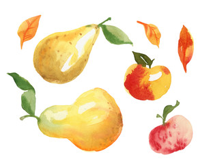 Hand painted watercolor illustration isolated on white background, apple pear and leaf.