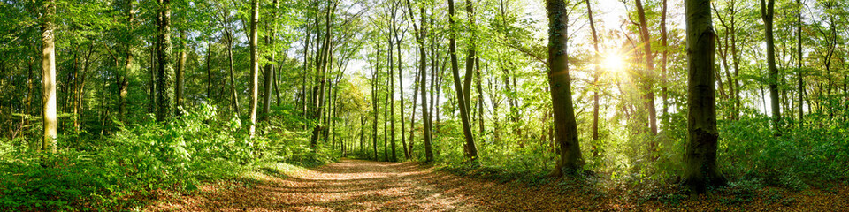 Wall Murals Road in forest Panorama of a forest with path and bright sun shining through the trees
