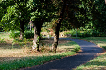 Asphalt road path in the middle a green forest on summer