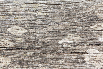 Old Bleached Wood Texture