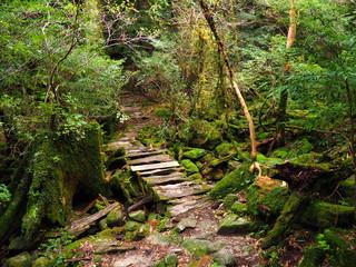 Yakushima ancient hiking path