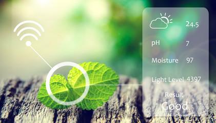 Smart agriculture, farm , sensor concept. (pH, moisture , light level) in plant vegetables farm. Flare light effect
