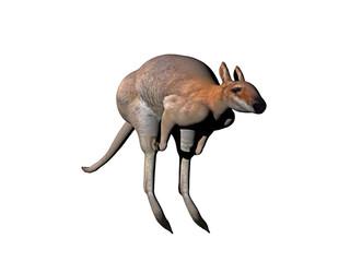 Känguru springt
