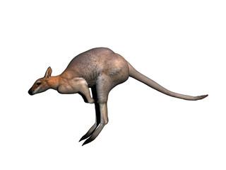 Känguru hüpft