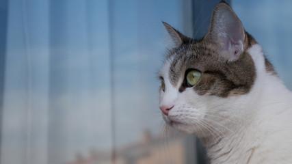 Gato (Hembra) 2