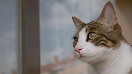 Gato (Macho) 3