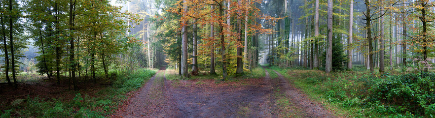 Keuken foto achterwand Bos in mist Panoramic view of autumn forest, beautiful autumn 3