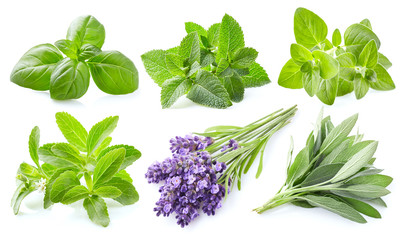 Collection of fresh herbs on white background