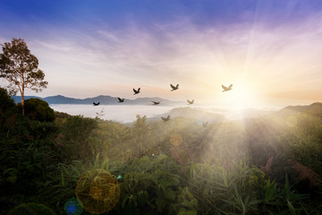 Wall Mural - The freedom of birds,freedom concept..Silhouette flock of birds flying over the valley on  sunbeam twilight cloud sky at sunrise..