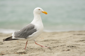 White feathered seagull on sand