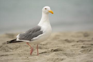 Single white seabird on sand