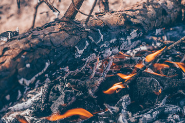 The log burns in the forest, the risk of fire
