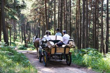 Carrozza nel bosco in Trentino Alto Adige