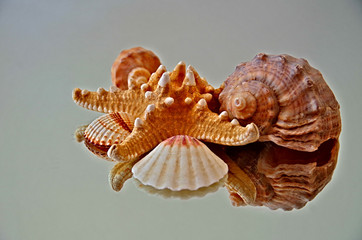 The Shell & Mirror Reflection