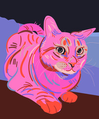 Sinopa Cat