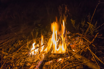Bonfire in the night forest