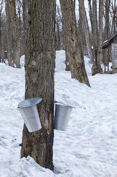 Harvest buckets at sugar shack