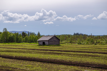 Lapland Finland, old barn on a field in northern lapland