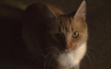 Foto primer plano gato
