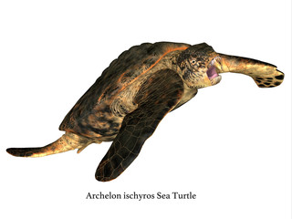 Archelon Turtle Swimming - Archelon was an aquatic reptile sea turtle that lived in South Dakota, USA during the Cretaceous Period.