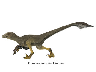 Dakotaraptor Dinosaur Side Profile - Dakotaraptor was a carnivorous dromaeosaurid theropod dinosaur that lived in South Dakota, North America during the Cretaceous Period.
