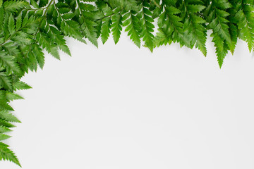 Frame made of fern leaves isolated on white background.