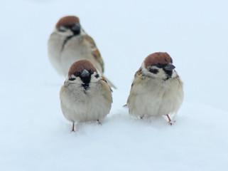 Deurstickers Vogel 雀