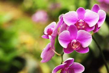 Tuinposter Orchidee beautiful orchid flower blooming at rainy season