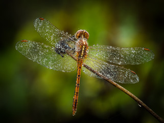 Dragonfly Roost