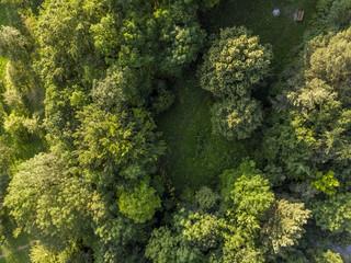 Wald mit Lichtung - Luftaufnahme