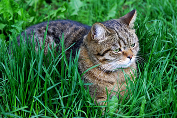 The kitten is lying among the thick green grass.