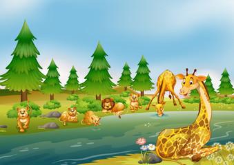 Wild animals living next to river