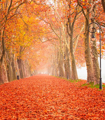 Nice autumnal scene at lake Balaton, Hungary