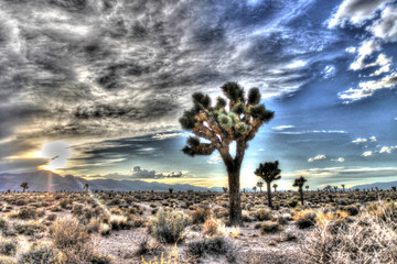 Area 51 Joshua Tree