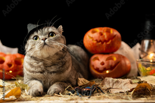 Scary halloween pumpkin Jack-o-lantern and cat in the hat on a black background