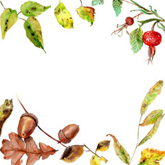 watercolor drawings of autumn leaves and fruits, composition, frame