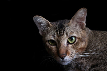 Portrait of tabby