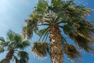 Palm trees. Summer vacation.