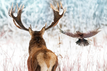 Wall Mural - Noble deer with big horns and raven in flight in a winter fairy forest. Christmas winter image.