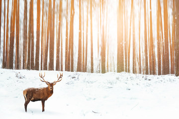 Wall Mural - Noble deer in the background of a winter fairy forest. Snowfall. Winter Christmas holiday image.