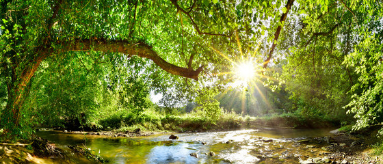 Foto op Canvas Bos Beautiful forest panorama with brook and bright sun shining through the trees