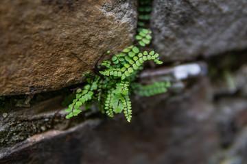 Green plant break through wall