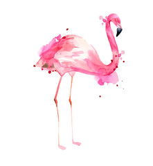 Watercolor hand drawn illustration pink flamingo. Tropical exotic bird rose flamingo with watercolor splashes on white background. Print for wrapping, wallpaper, cards, textile.