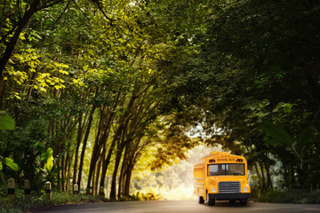 Yellow school bus coming through the trees tunnel.