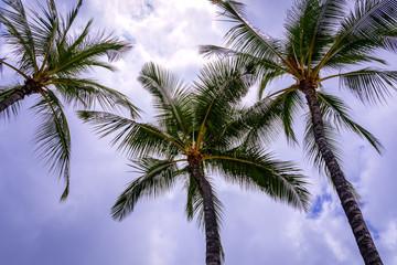 Palm Trees against a purple blue sky
