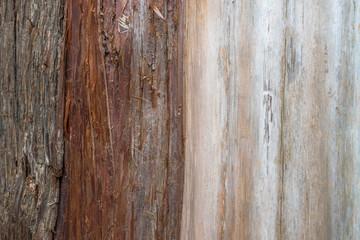 Tree bark. A close-up. A tree trunk.