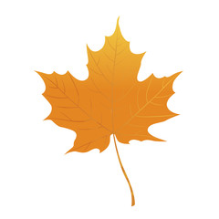 Orange maple leaf isolated on a white background. Autumn element for your design. Vector illustration.