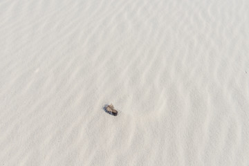 Lonely feather in white sand on desert background